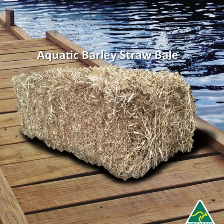 aquatic-barley-straw-bales for algae removing